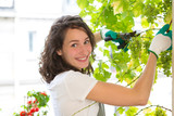 Young woman harvesting grape on a vine on her citygarden balcony - Fruit and nature theme - 184145634