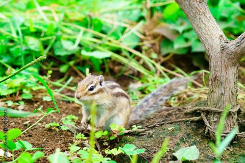 Tuinposter Eekhoorn りす物語
