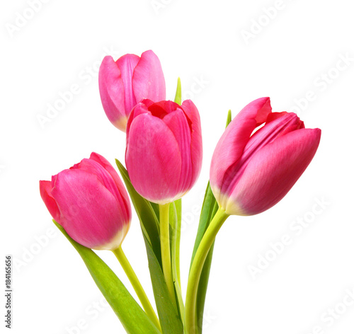 Flower Tulips as Symbol of Romance and Love  - 184165656