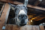 christmas donkey in stable - 184195052