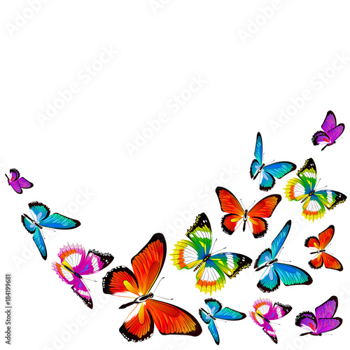 Plexiglas Vlinder beautiful color butterflies,set, isolated on a white