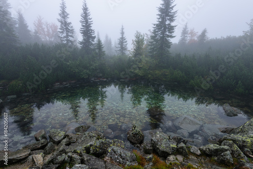 Keuken foto achterwand Grijs reflections of trees in the lake water in the morning mist