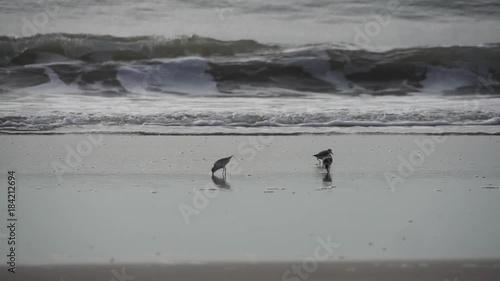 three shore birds on the beach