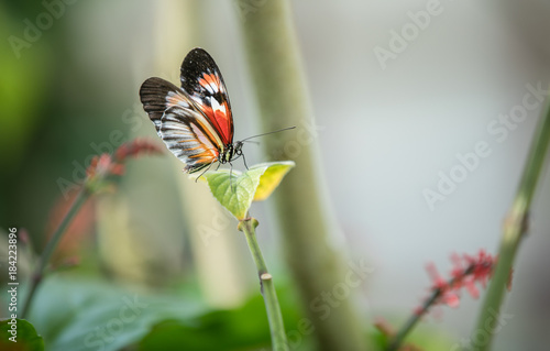 Plexiglas Vlinder colorful butterfly perched on a leaf in the noon sun