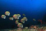 Underwater coral reef and fish - 184224889
