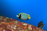 Underwater coral reef and fish - 184224896