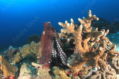 Reef Octopus Poster