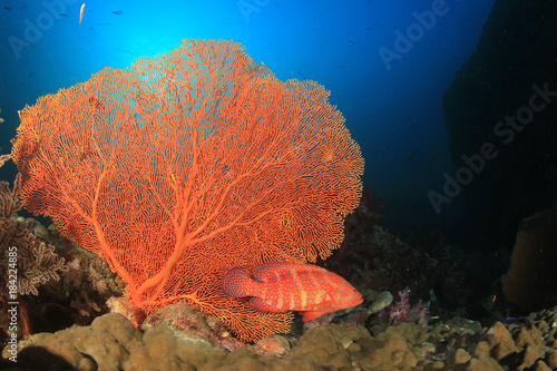 Underwater coral reef and fish Poster