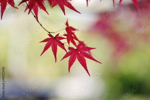 Deurstickers Kyoto 京都の秋