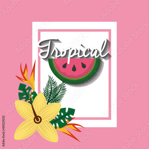 tropical watermelon fruit hibiscus and bird of paradise vector illustration