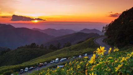 Mountain meadow, Mexican tournesol, Mexican sunflower, Mae Hong Son Thailand.