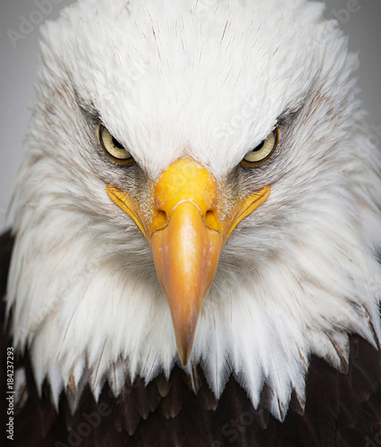 Plexiglas Eagle Eagle