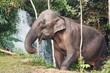 Elephant in jungle - 184250670
