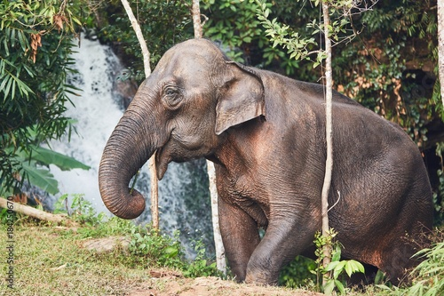 Elephant in jungle - 184250670