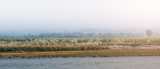 beautiful view of Chitwan national park landscape with river, cane and green trees, Neplal. - 184254671