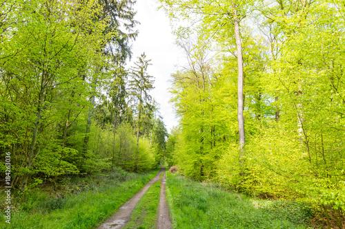 Fotobehang Pistache Wald im Mai