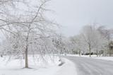 Snowy winter landscape after snowstorm - 184271436