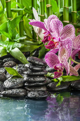 stack stones , pink orchid and bamboo in the waters drops