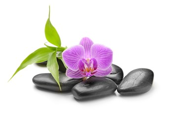 spa symbol with orchid and black stones isolated on white background