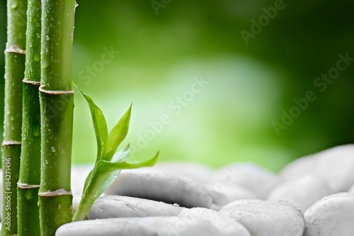 Foto op Canvas Zen small bamboo sprout on the white stones