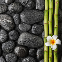plumeria and bamboo grove on the black stones in water drops