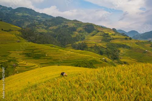 Deurstickers Honing landscape
