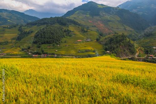 Papiers peints Miel landscape vietnam
