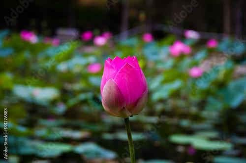 Foto Murales hoa sen