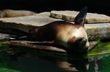 sea lion near the water - 184281439