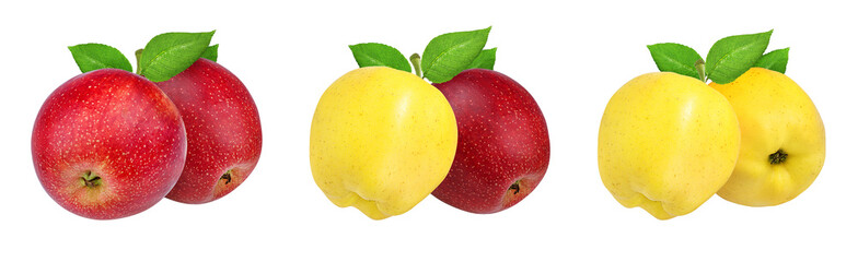 Fresh yellow and red apples isolated on white background with clipping path