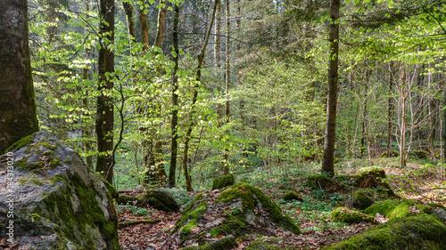 Wanderweg Buchberger Leite; Bayrischer Wald