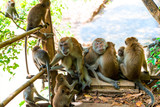 adult monkeys and young on the trail in Thayland, Krabi resort - 184320673