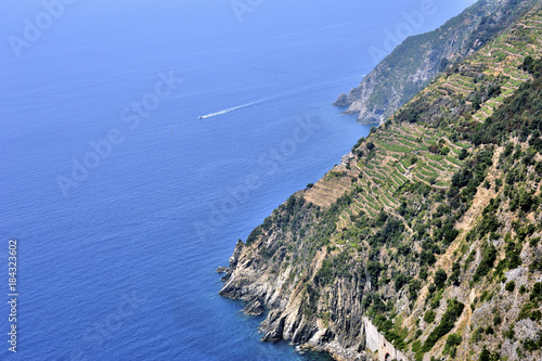 Foto op Aluminium Liguria Abrupt descending vineyards at Cinque Terre, Italy