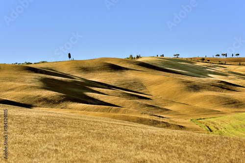 Fotobehang Toscane cornfields on rolling hills with long shadows seams like dunes in evening light, Tuscany, Italy