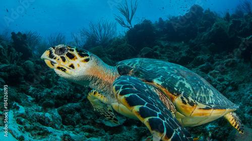 Aluminium Schildpad Schildkröte Curacao