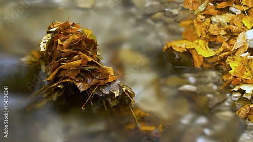 Foto op Aluminium Scandinavië Autumn flowing mountain stream in Slovakia. Colored leafs in the water. Fresh natural water.
