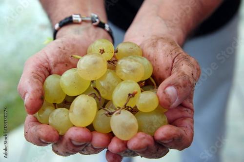 Vineyard saveurs et terroirs