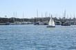 Quadro Sailing at Marina Del Rey, California