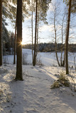 Snowy winter forest in Finland. Winter wonderland on a cold morning. Sunrise behind the trees. Snow covered ground. - 184338093