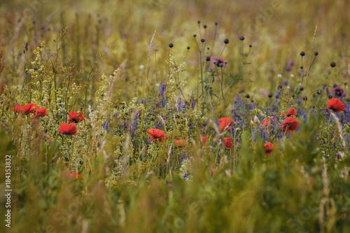 Staande foto Klaprozen Kornfeld mit Wildblumen und Mohn