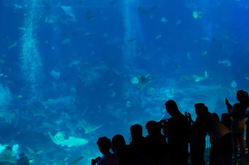 people observing fish in aquarium  , Ocean fish in tank
