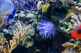 coral in deep blue sea
