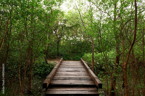 Plexiglas Bruggen Wood bridge in the forest