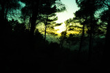 Silhouette of a forest with trees at a spring sunset - 184415018
