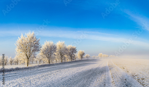 white icy trees in snow covered landscape - 184419464