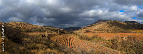 Foto op Canvas Wijngaard Vineyards. The Autumn Valley