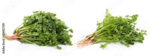 In de dag Verse groenten fresh coriander leaves on white background