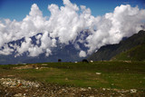 horses grazing on green grass in mountain valley, Indian Himalayas, Rohtang Pass
