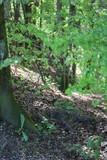 Wald Abhang - 184443810