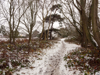 winter walkway path through forest snow covered floor trees